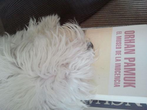 Las siestas de Max Gutenberg