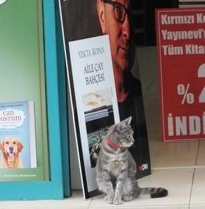 gato librero
